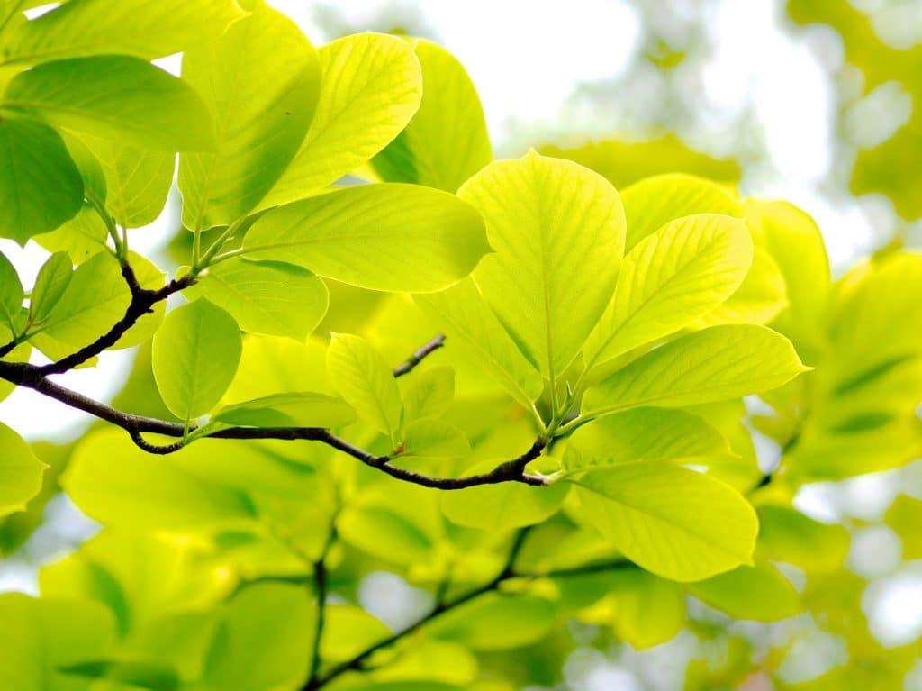 新緑の季節イメージ